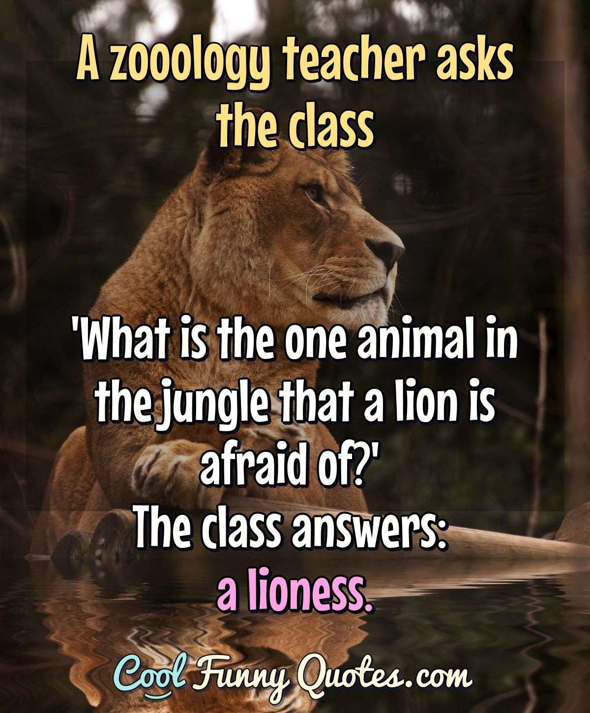 A zooology teacher asks the class 'What is the one animal in the jungle that a lion is afraid of?' The class answers: a lioness. - Anonymous