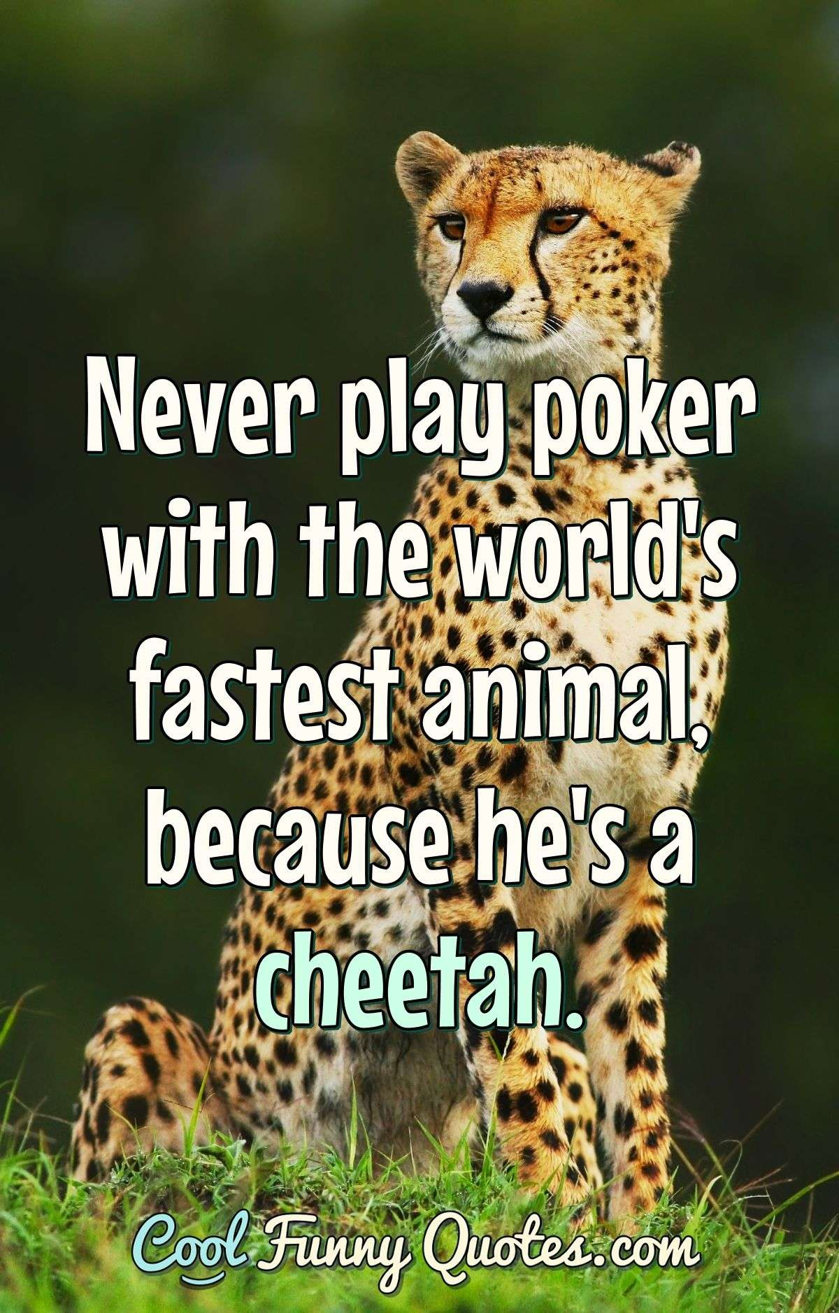 Never play poker with the world's fastest animal, because he's a cheetah. - Anonymous