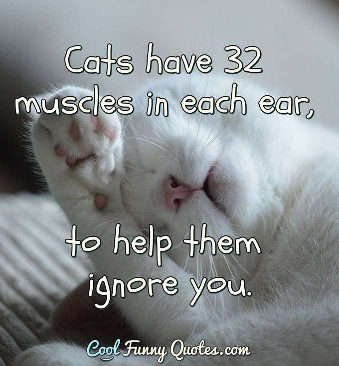 Cats have 32 muscles in each ear, to help them ignore you. - Anonymous