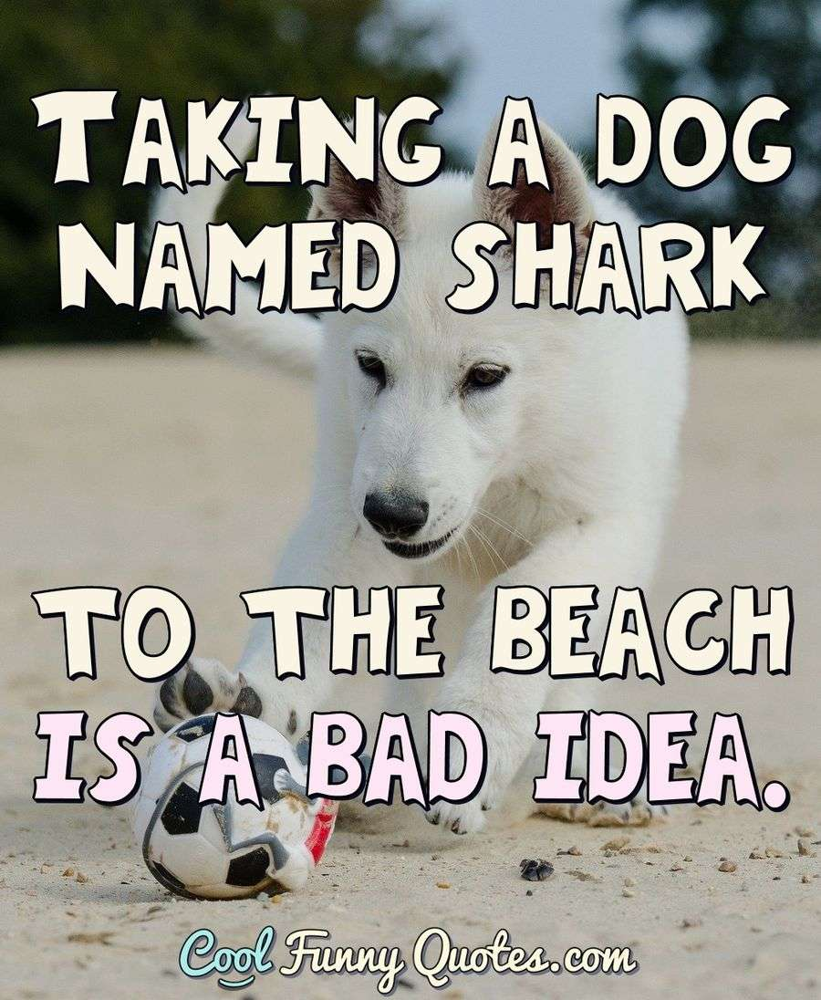 Taking a dog named shark to the beach is a bad idea.