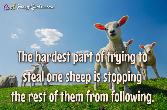 The hardest part of trying to steal one sheep is stopping the rest of them from following.