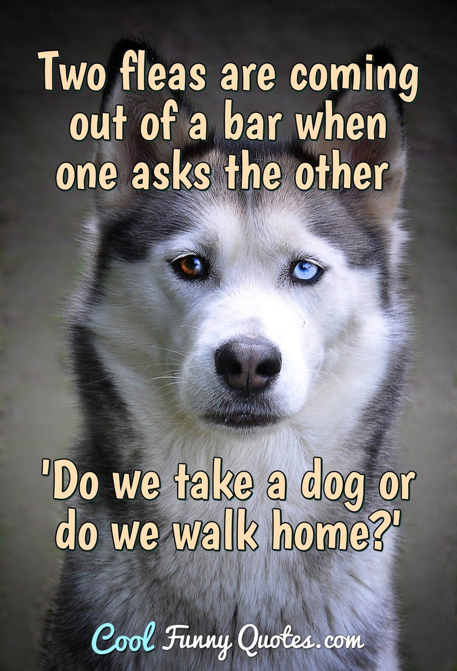 Two fleas are coming out of a bar when one asks the other 'Do we take a dog or do we walk home?' - Anonymous