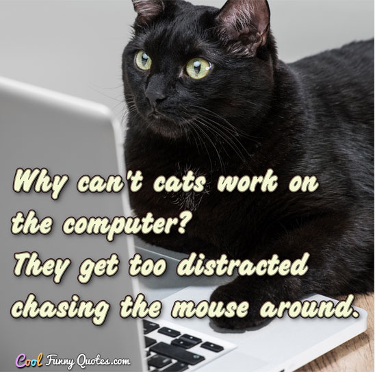 Why can't cats work on the computer?  They get too distracted chasing the mouse around.